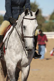 Elegant Horse and Rider. Closeup of a well-groomed and elegant horse and rider warming up in an arena before the start of a morning horse show (shallow focus Stock Photo