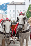 Elegant horses on city square Royalty Free Stock Images