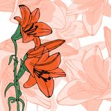 Elegant illustration of lilly flowers Stock Photo