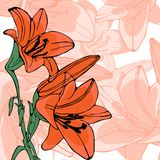 Elegant illustration of lilly flowers Stock Photos
