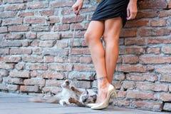 Elegant Italian woman keeps her cat on a leash. Elegant Italian woman with a miniskirt keeps her cat on a leash stock photos