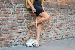 Elegant Italian woman keeps her cat on a leash. Elegant Italian woman with a miniskirt keeps her cat on a leash royalty free stock image