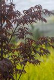 Elegant Japanese zen style bamboo tree. Background dark red leaves against bright green background royalty free stock image