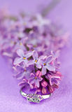 Elegant jewelry and lilac stock image
