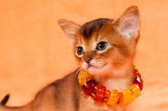 Elegant kitten Royalty Free Stock Image
