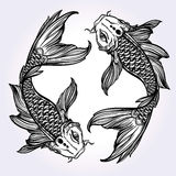 Elegant Koi carp fish illustration. Royalty Free Stock Images