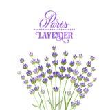 Elegant kort för lavendel Arkivbilder