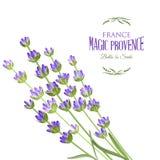 Elegant kort för lavendel Arkivfoto