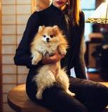 Elegant kvinna som rymmer den gulliga pomeranian hunden i lägenhet arkivbild