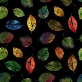 Elegant leaves for design. Colorful autumn leaves. Seamless pattern of leaves. royalty free illustration