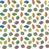 Elegant leaves for design. Colorful autumn leaves. Seamless pattern of leaves. stock illustration