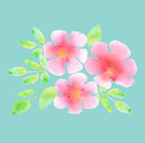 Elegant light rosy blossom on blue mint color background. Royalty Free Stock Image