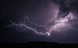 Elegant lightning tree Royalty Free Stock Photography
