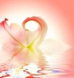 Elegant lily flower Stock Photo