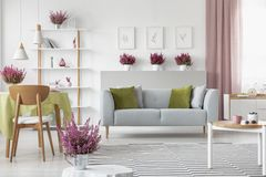 Elegant living room with heather on the shelf, white furniture, stylish wooden coffee table, patterned rug and grey couch. With olive green and grey pillows stock image