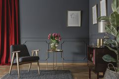 Elegant living room interior with fresh pink tulips on gold table, grey armchair standing on carpet, red curtain and posters hang royalty free stock image