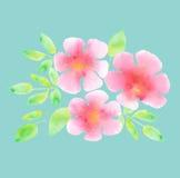 Elegant ljus rosig blomning på blå mintkaramellfärgbakgrund royaltyfri illustrationer