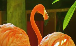 Elegant mirakel- fågel Arkivfoto