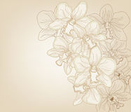 Elegant orchid background Royalty Free Stock Image