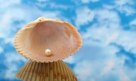 elegant pärlemorfärg skalsky Royaltyfri Foto