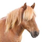 Elegant paard Stock Afbeelding