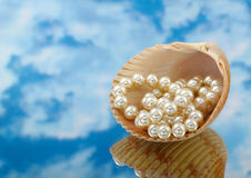 Elegant pearls over in shell with sky Stock Image