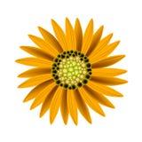 Elegant Perfect Orange Sunflower on White Background. Beautiful Flower, Illustration Bright and Beautiful Orange Colors of Sunflowers  on A White Background Royalty Free Stock Photos