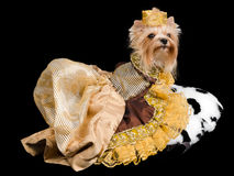 Elegant pet/ dog clothing Royalty Free Stock Images