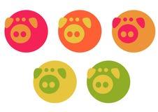 Elegant pigs Stock Photography