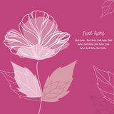 Elegant poppy flower background. Elegant poppy flower on lilac background Stock Photos