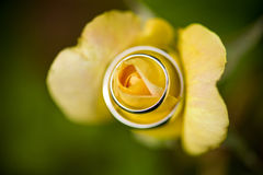 Elegant Promise. Wedding bands wrapped around a yellow rose Stock Photography