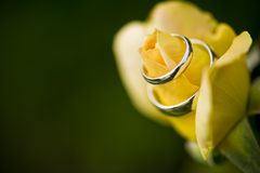 Elegant Promise. Wedding bands wrapped around a yellow rose Royalty Free Stock Images