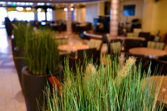 Elegant restaurant dining space. Green grass Royalty Free Stock Photography
