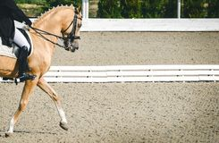 Elegant rider woman and sorrel horse. Beautiful girl at advanced dressage test on equestrian competition. Professional female horse rider, equine theme. Saddle Stock Photography