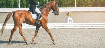 Elegant rider woman and sorrel horse. Beautiful girl at advanced dressage test on equestrian competition. Professional female horse rider, equine theme. Saddle Royalty Free Stock Photography