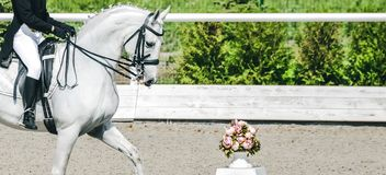 Elegant rider woman and white horse. Beautiful girl at advanced dressage test on equestrian competition. Professional female horse rider, equine theme. Saddle Royalty Free Stock Photography