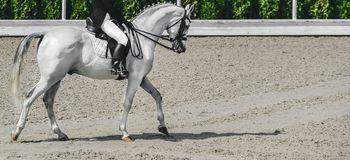 Elegant rider woman and white horse. Beautiful girl at advanced dressage test on equestrian competition. Professional female horse rider, equine theme. Saddle Stock Image