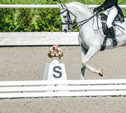 Elegant rider woman and white horse. Beautiful girl at advanced dressage test on equestrian competition. Professional female horse rider, equine theme. Saddle Stock Photography