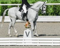Elegant rider woman and white horse. Beautiful girl at advanced dressage test on equestrian competition. Professional female horse rider, equine theme. Saddle Royalty Free Stock Images