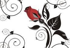 Elegant rose background Royalty Free Stock Photos