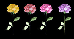 Elegant  roses in a row luxurious  Watercolor  textured flower art. Long stem roses  yellow pink red and lilac growing in a stripe rose bloom elegant silhouette Royalty Free Stock Images