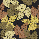 Elegant seamless pattern with colorful leaves on brown backgroun Stock Images