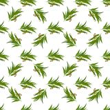Elegant seamless pattern with eucalyptus leaves. Vector seamless pattern with eucalyptus twig, flowers and pods seeds Stock Images