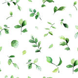 Elegant seamless pattern with green leaves painted with watercolors on white background. stock photography