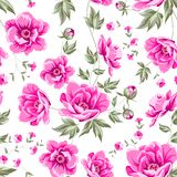 Elegant seamless peony pattern. Royalty Free Stock Images