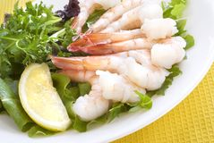 Elegant Shrimp Salad on Plate Royalty Free Stock Image