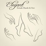 Elegant silhouettes of female hands and feet. Set of elegant silhouettes in a linear sketch style (female hands and feet). Design elements for skin care industry Royalty Free Stock Image