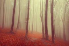 Elegant skog i en dimmig dag Arkivbild