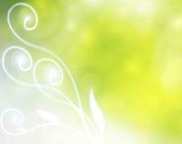 Elegant sommarbakgrund Royaltyfri Fotografi
