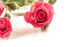 Elegant spray pink rosebud Stock Images